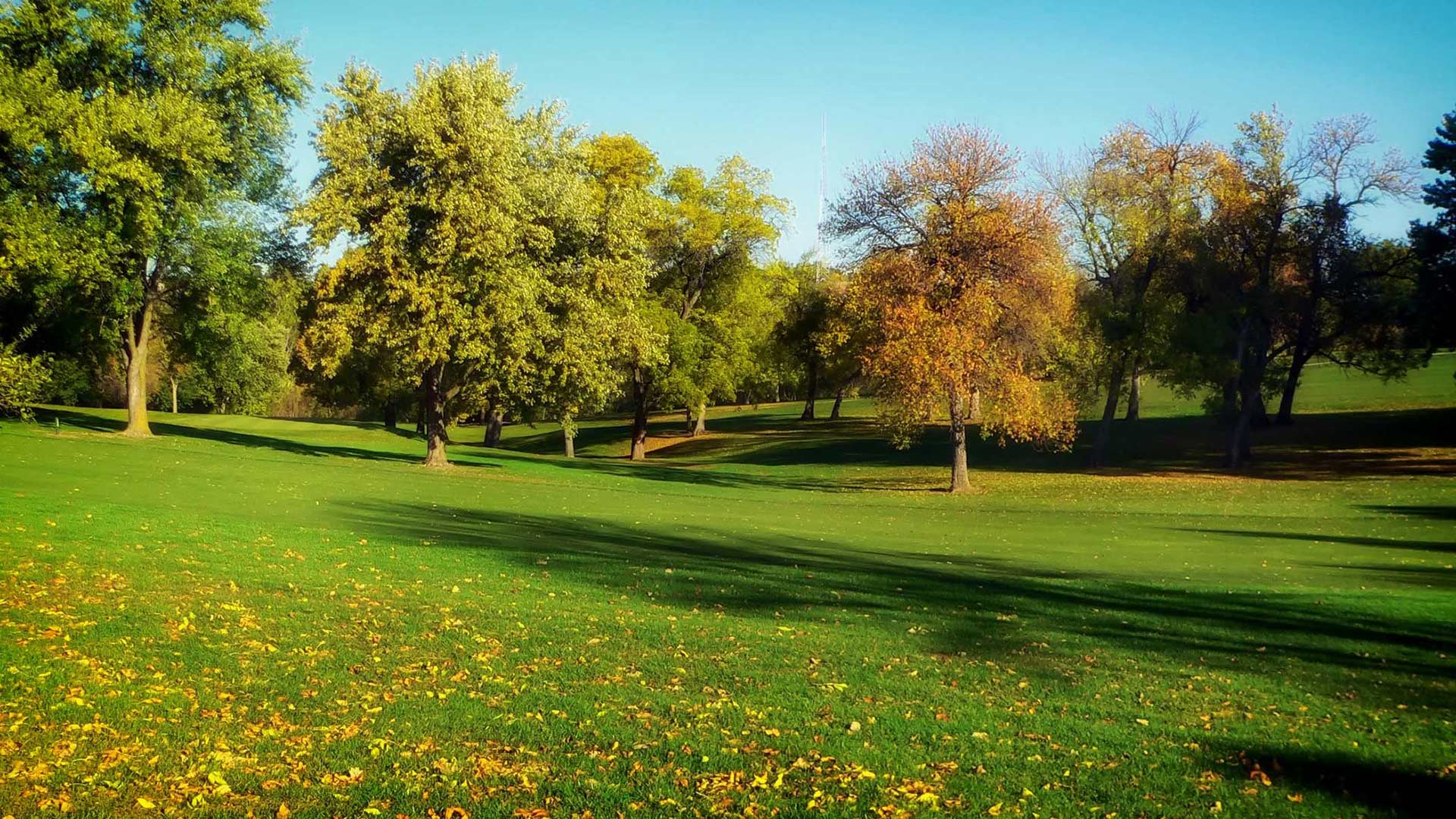 Mohab Ibrahim wondered if the green of parks could be why they seem to be effective at soothing headaches.