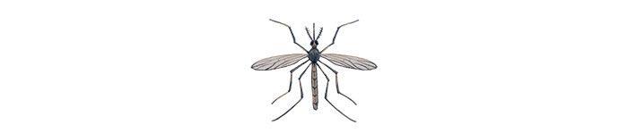 npr news warm winters mosquito
