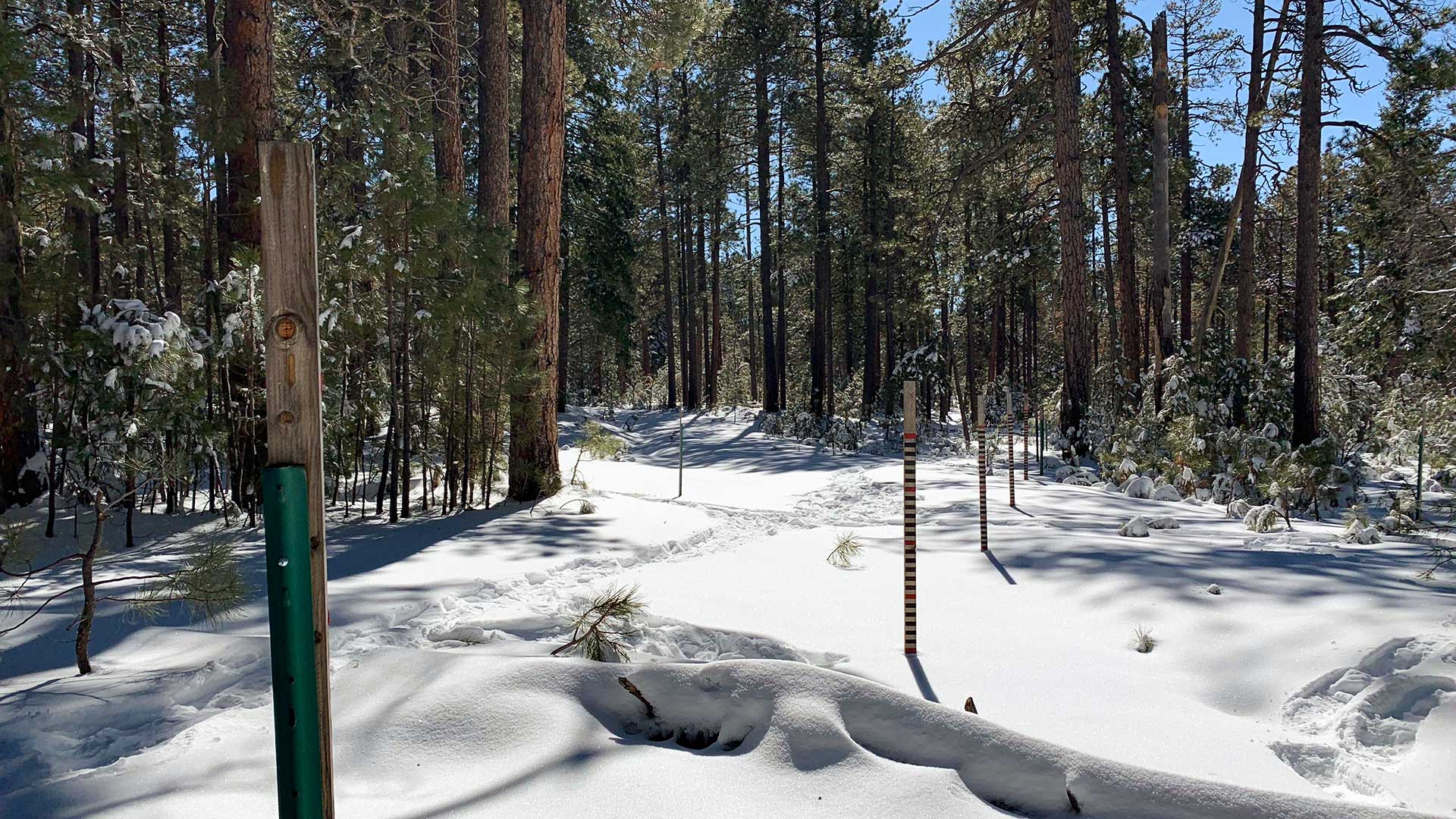january snowcover