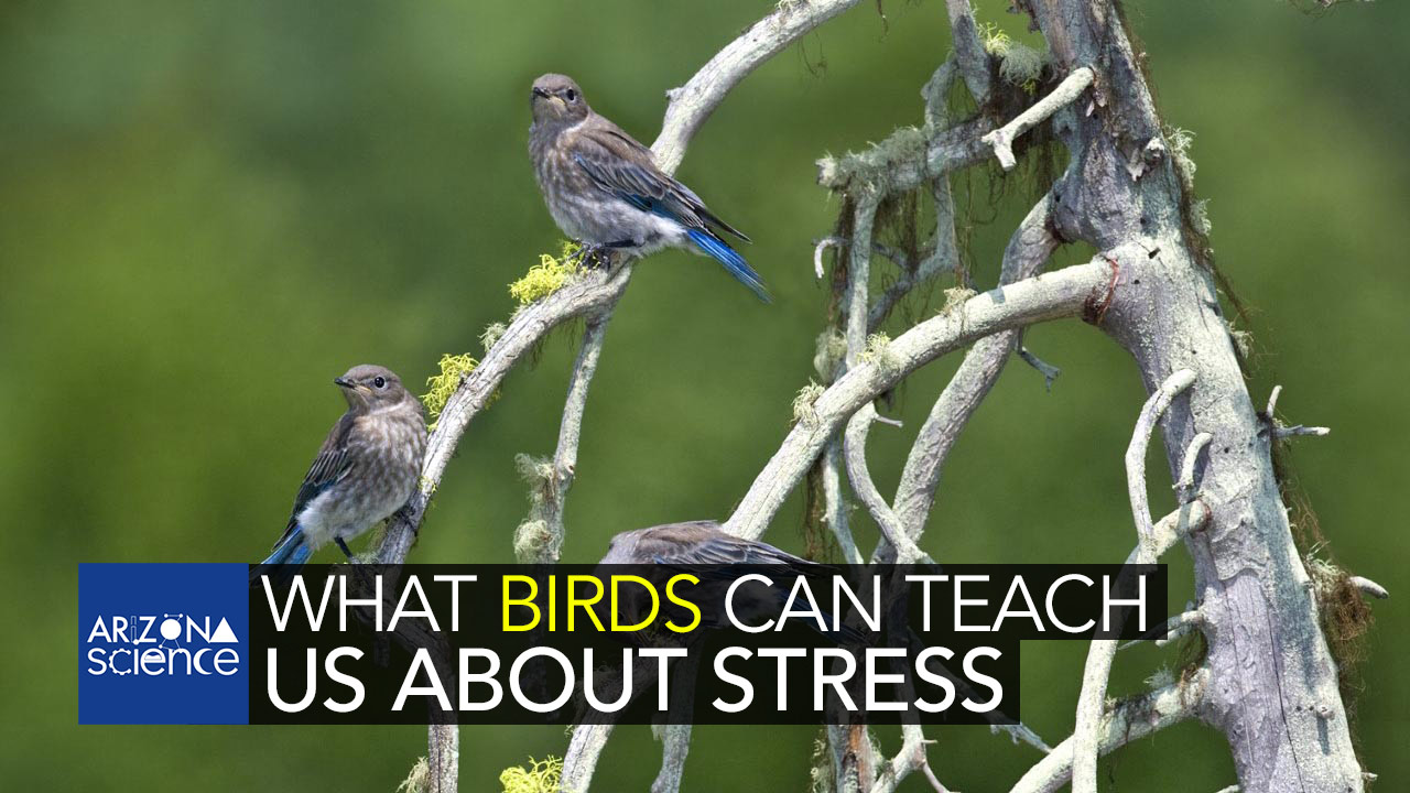 Episode 223: What birds can teach us about stress