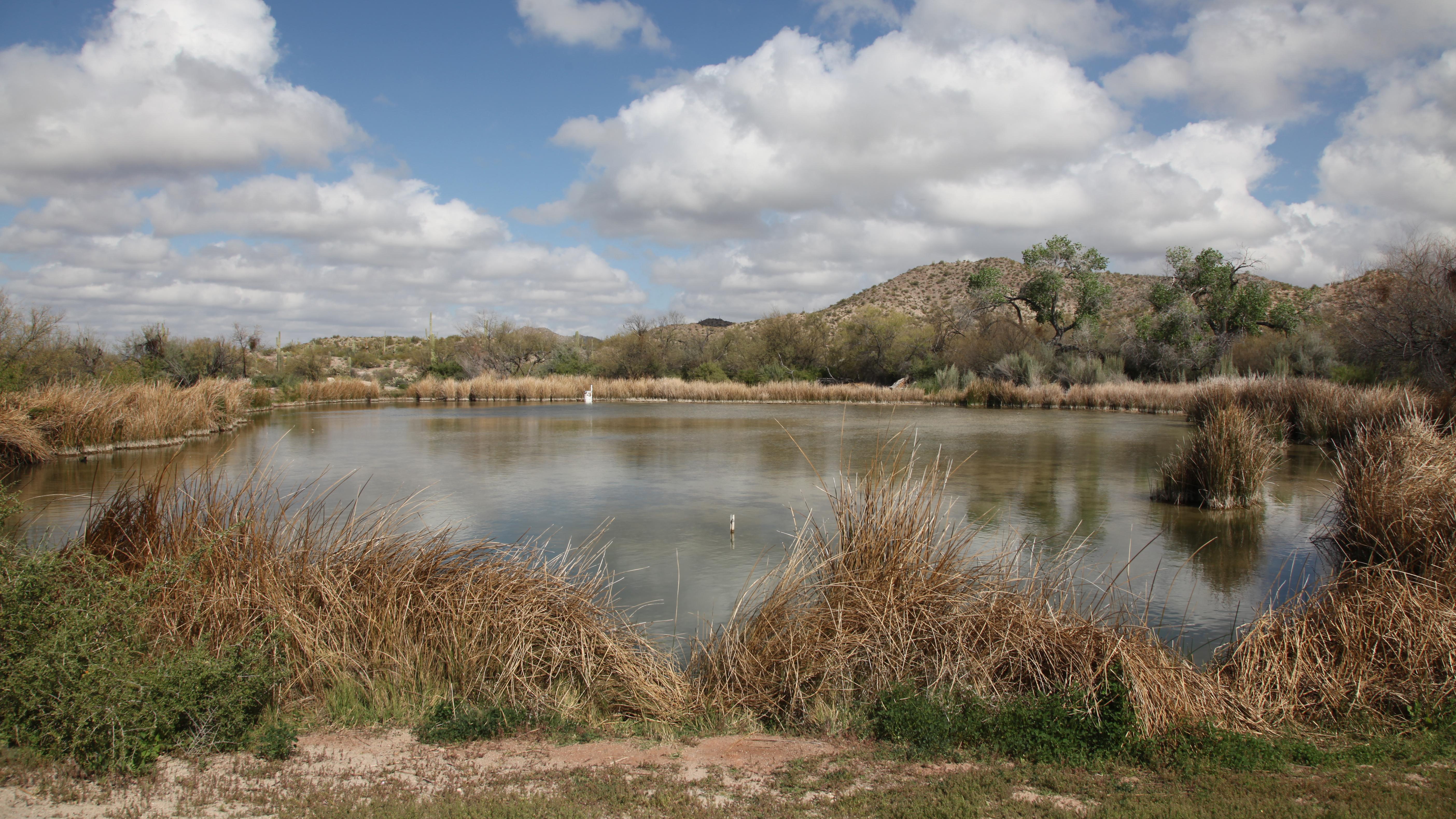 pond near Quitobaquito Springs