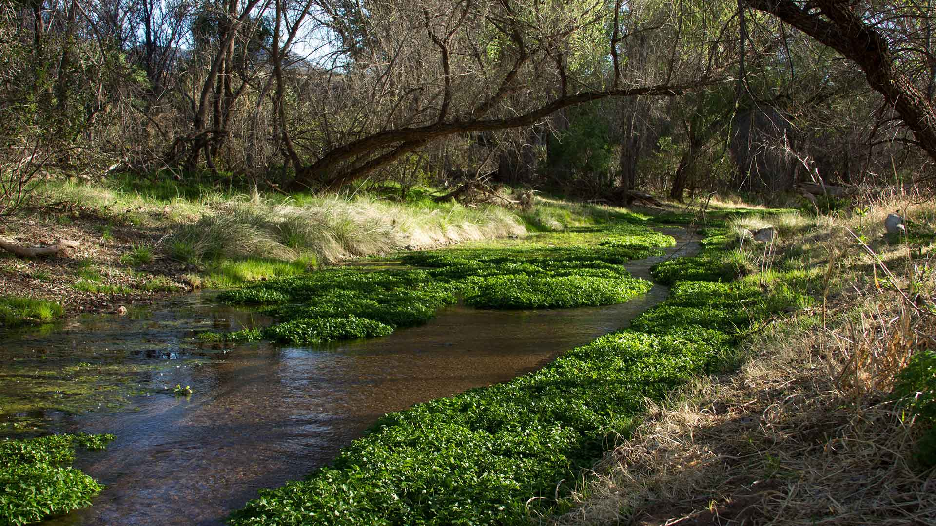 The Nature Conservancy's Patagonia-Sonoita Creek Preserve.