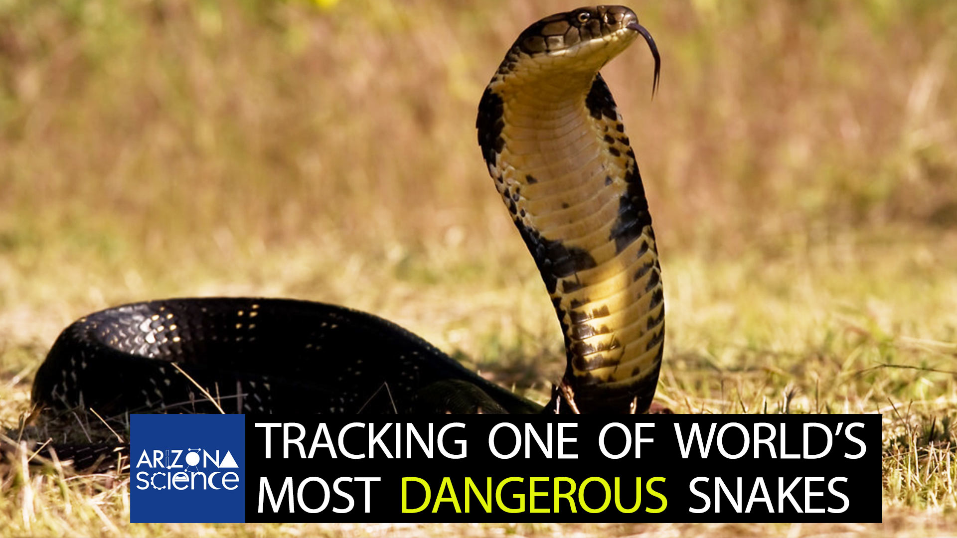Episode 224: Tracking one of the world's most dangerous snakes