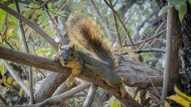 education 4-8 squirrel