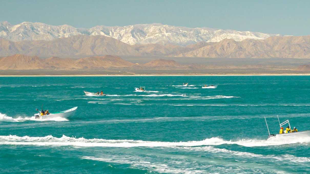 vaquita refuge boats