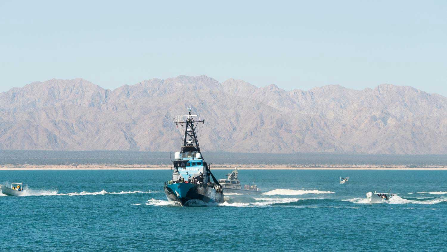 At least 20 small fishing boats surround Sea Shepherd's ship M/V Sharpie in the vaquita refuge on March 3, 2020.