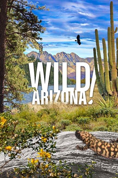 Wild Arizona!