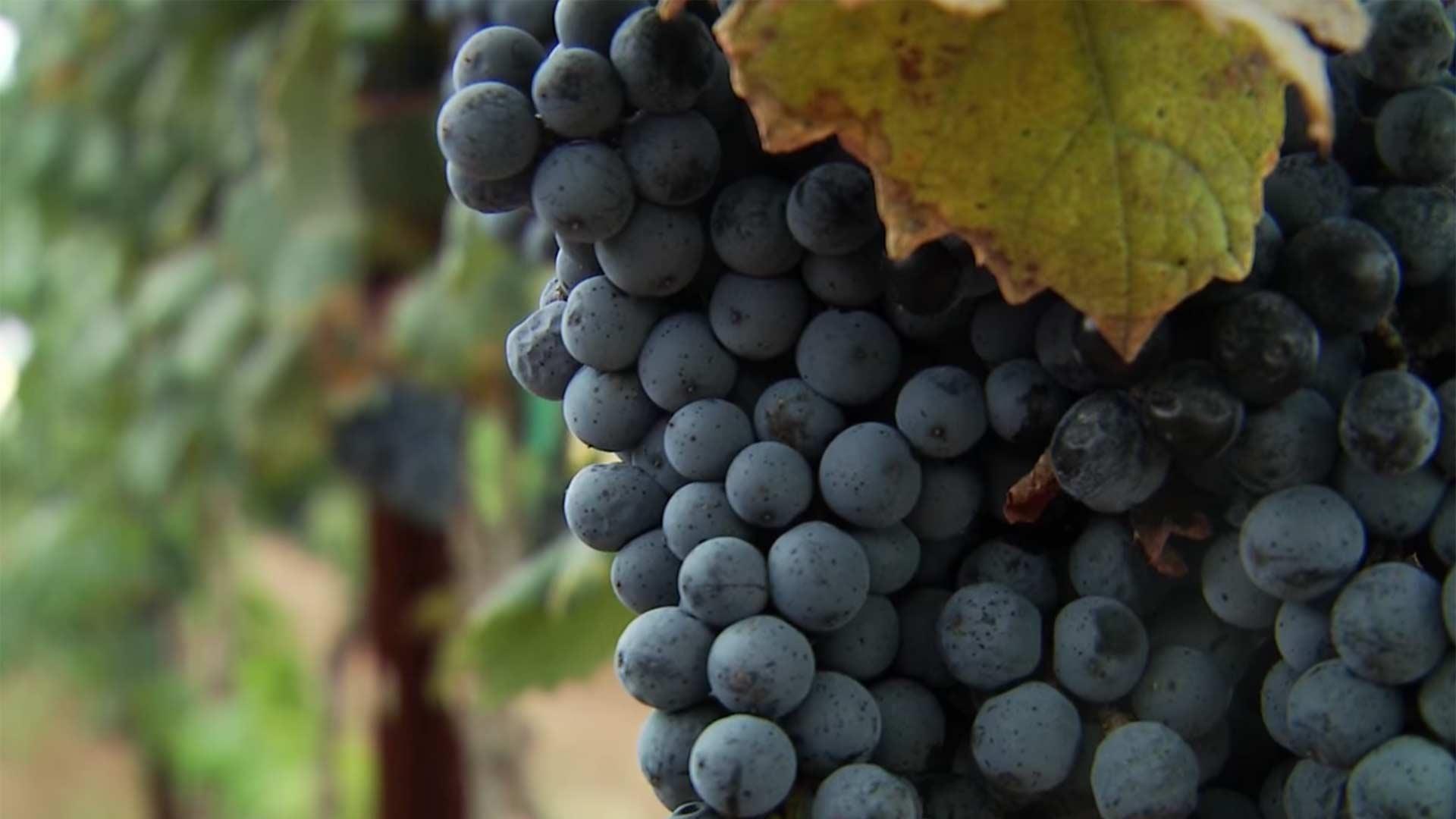 grapes willcox balancesheet