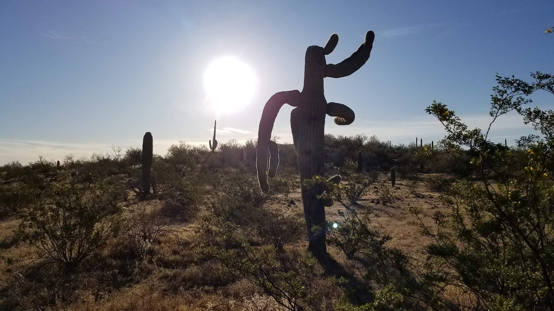 The sun shines harshly behind a saguaro cactus.