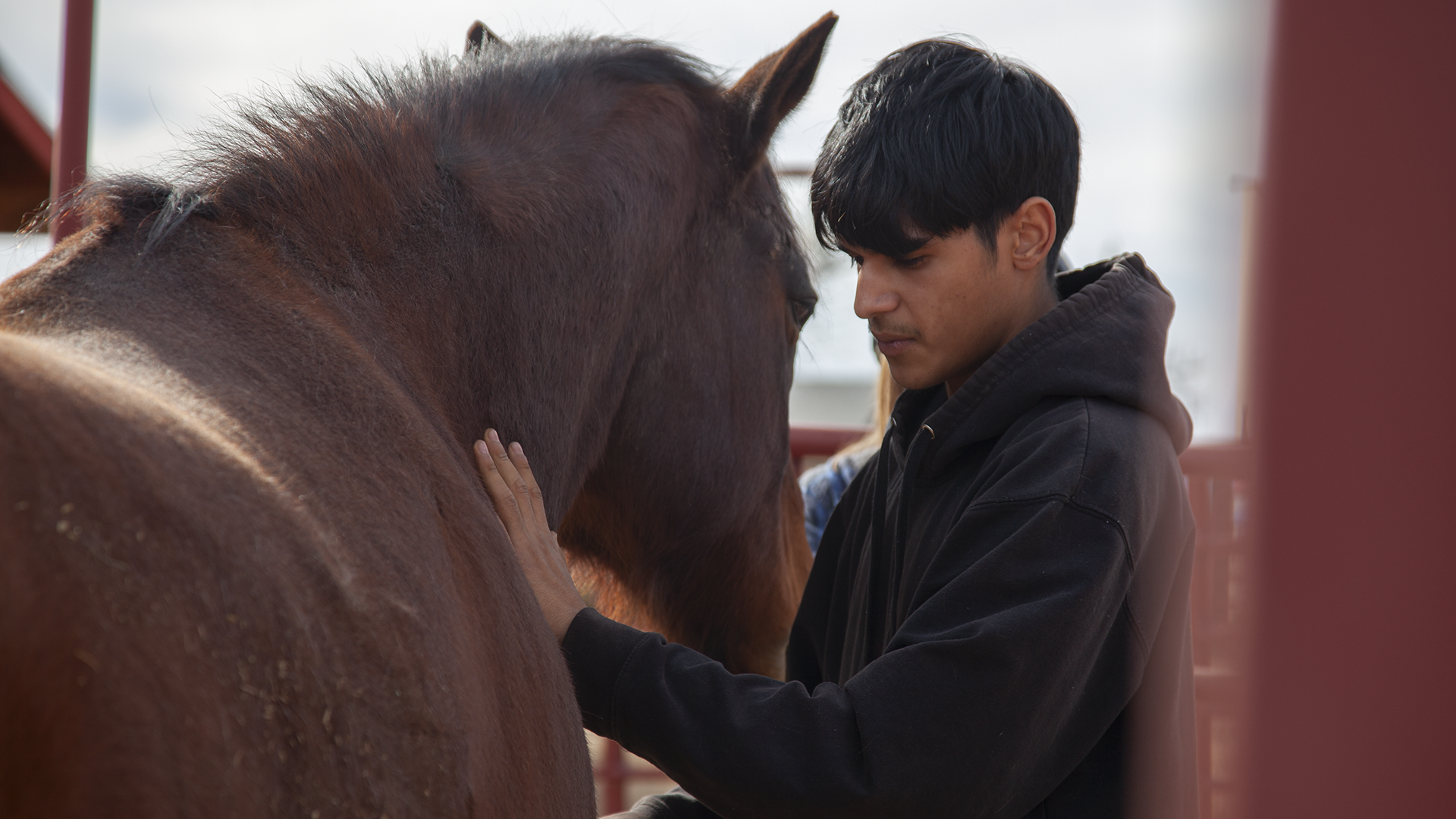 Israel Guerrero grooming Boomer at the Pascua Yaqui Tribe's Tortuga Ranch February 27, 2020.