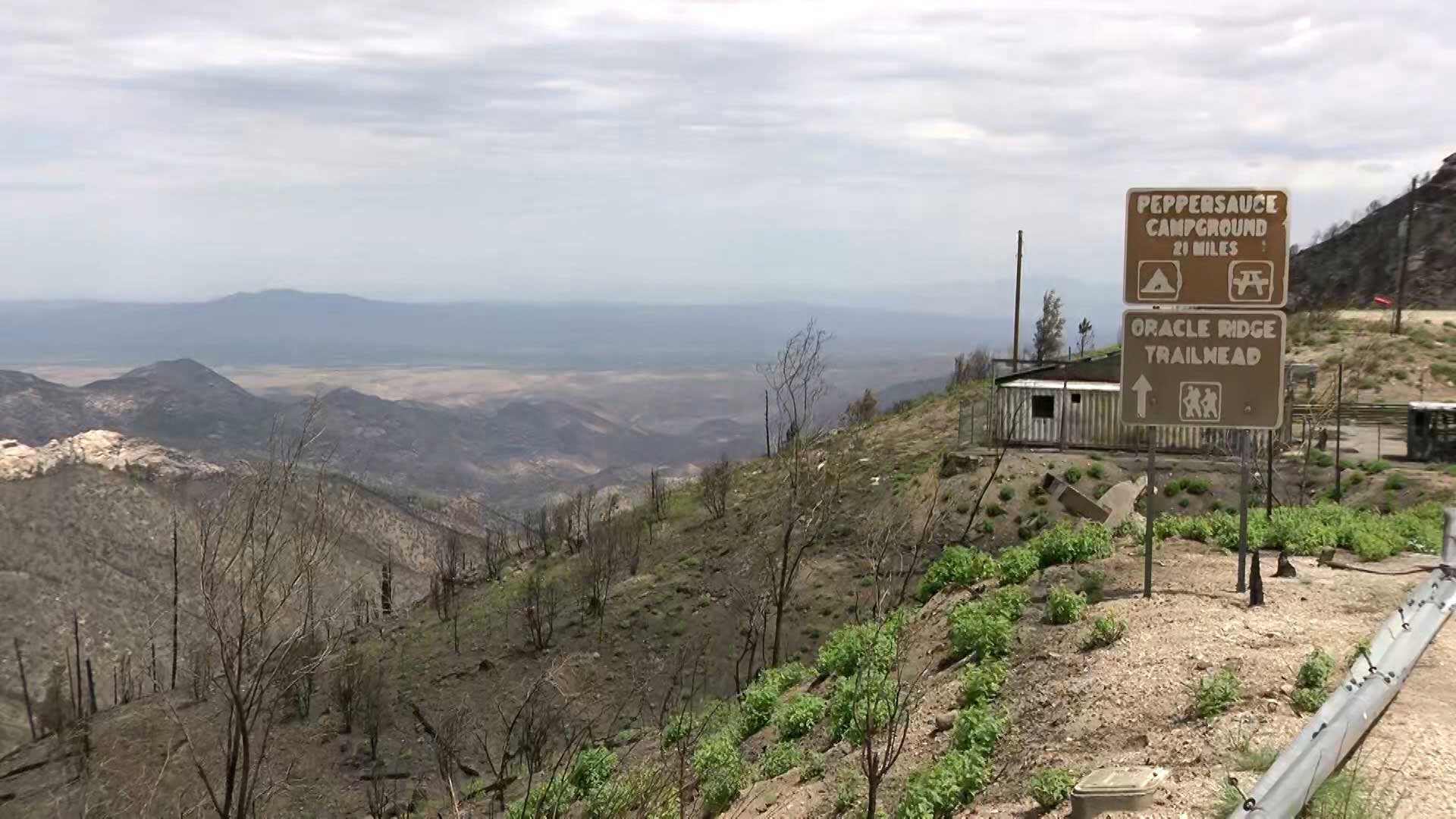 An area burned by the Bighorn Fire in the Santa Catalina mountains.