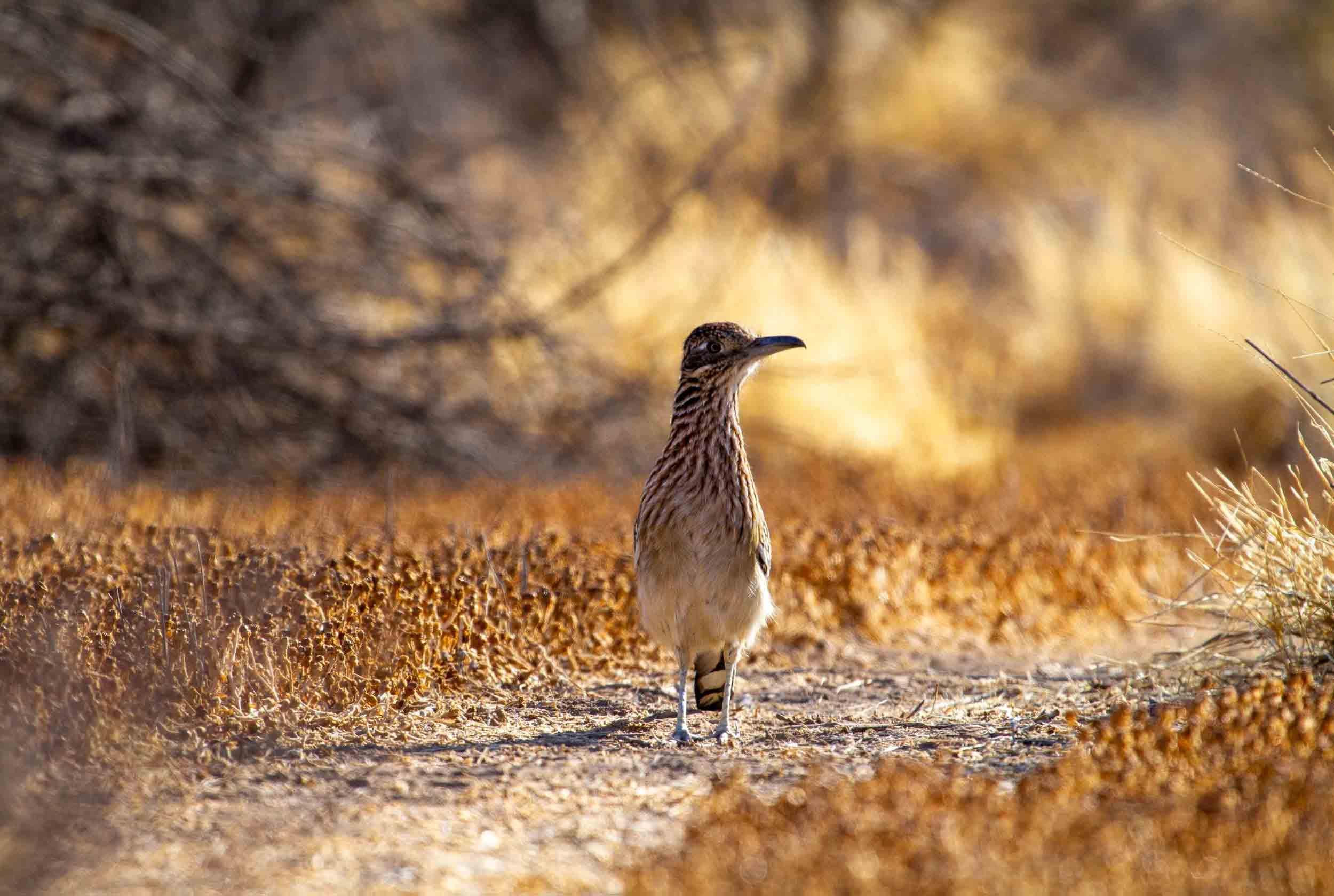 npr news bird photography 9