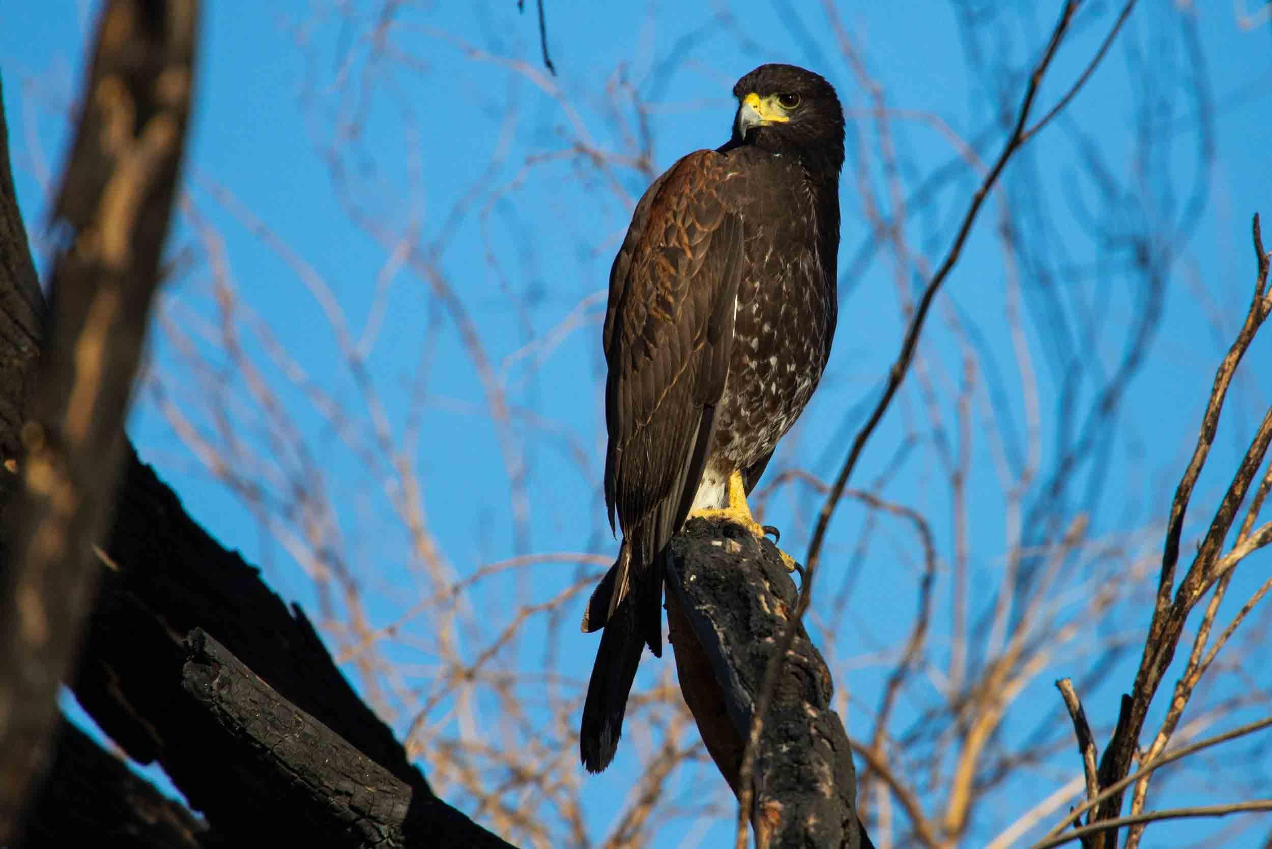 npr news bird photography 2