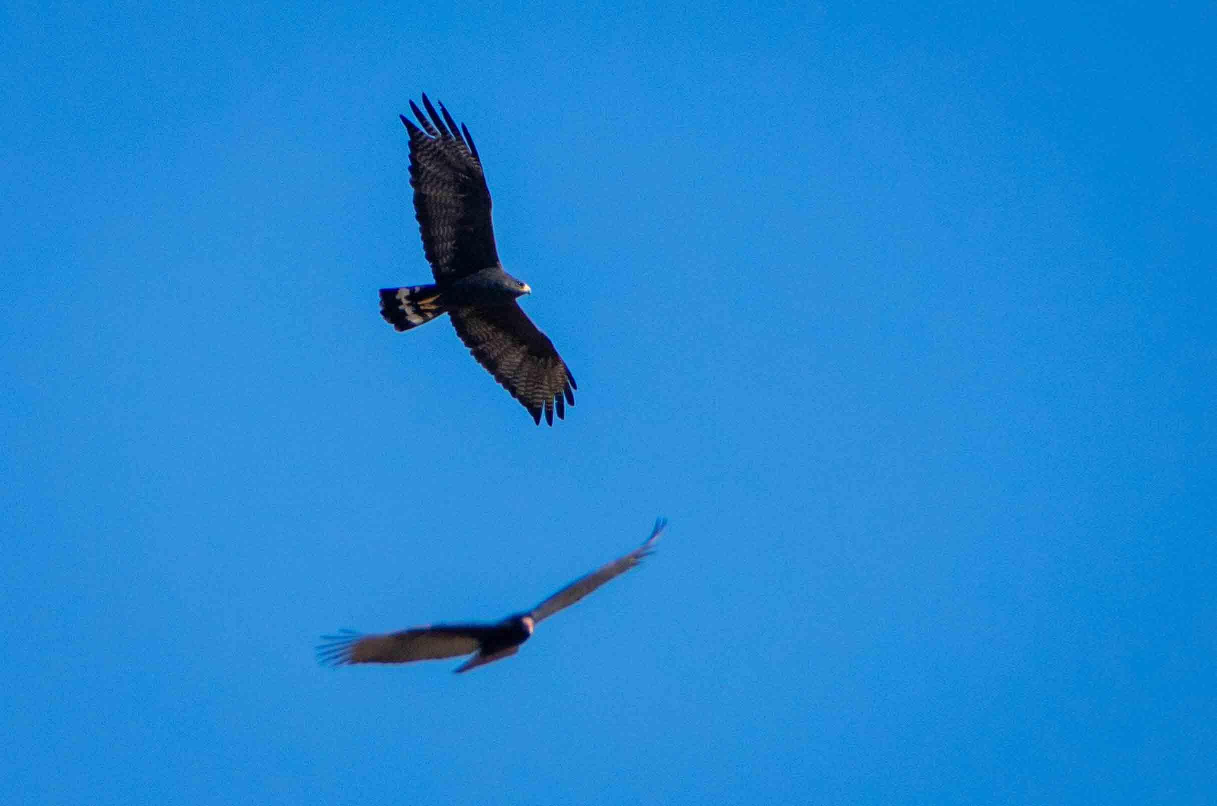 npr news bird photography 3