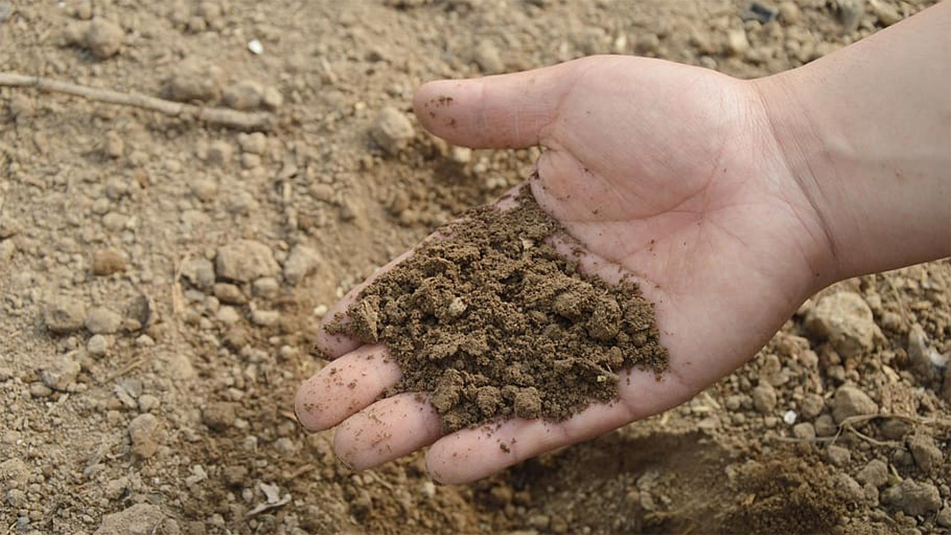 Experts anticipate a warming climate will change the way microbes feed the soil.