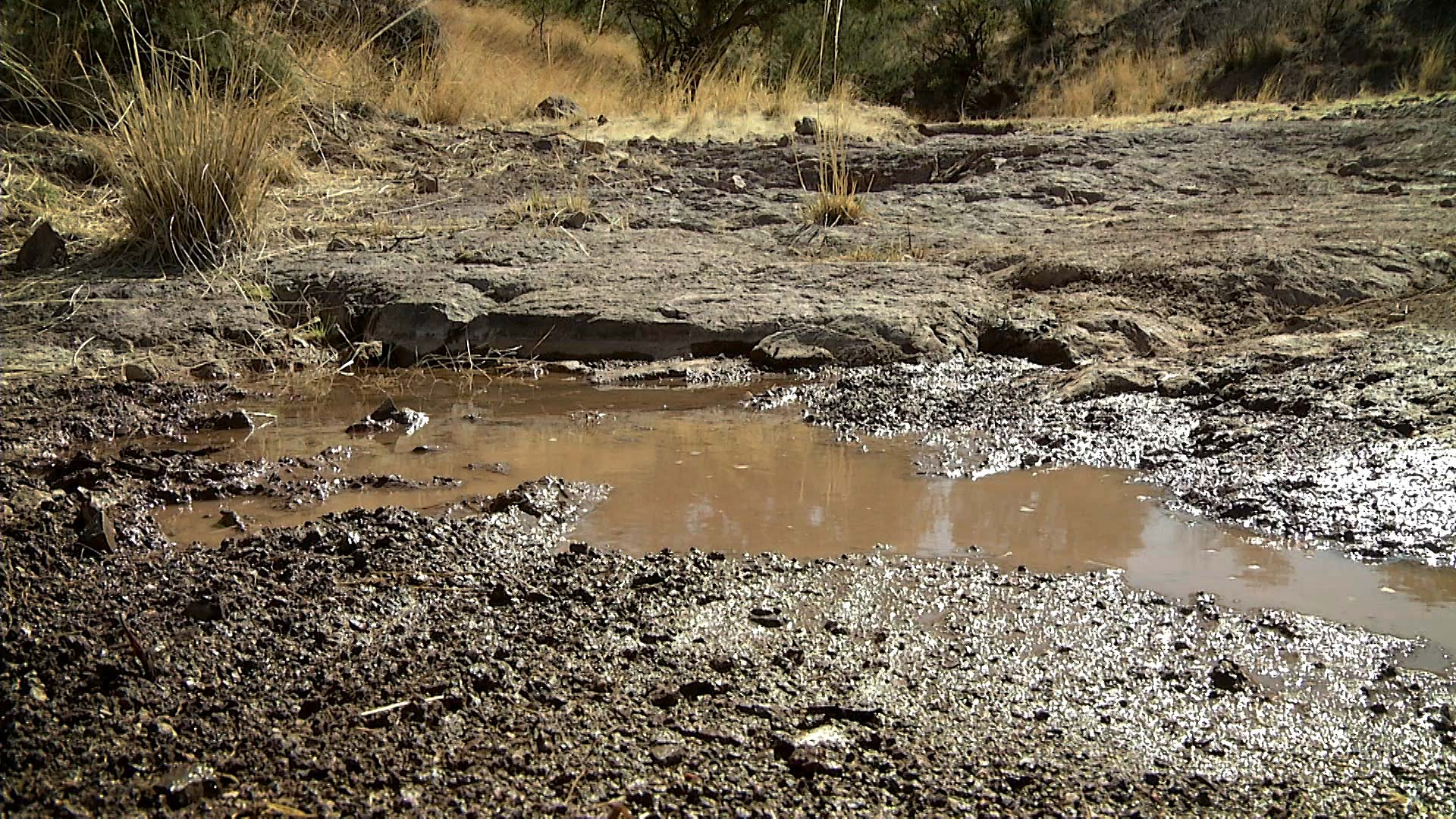 A puddle in a relatively dry creek bed in the Patagonia Mountains at a time when the region was experiencing extreme and exceptional drought. March 2021.