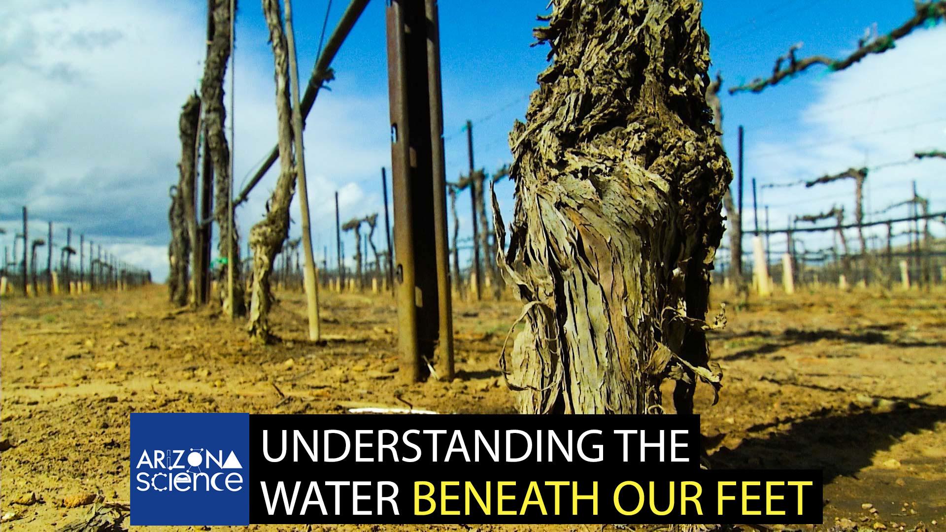 Grape vineyard in Willcox AZ