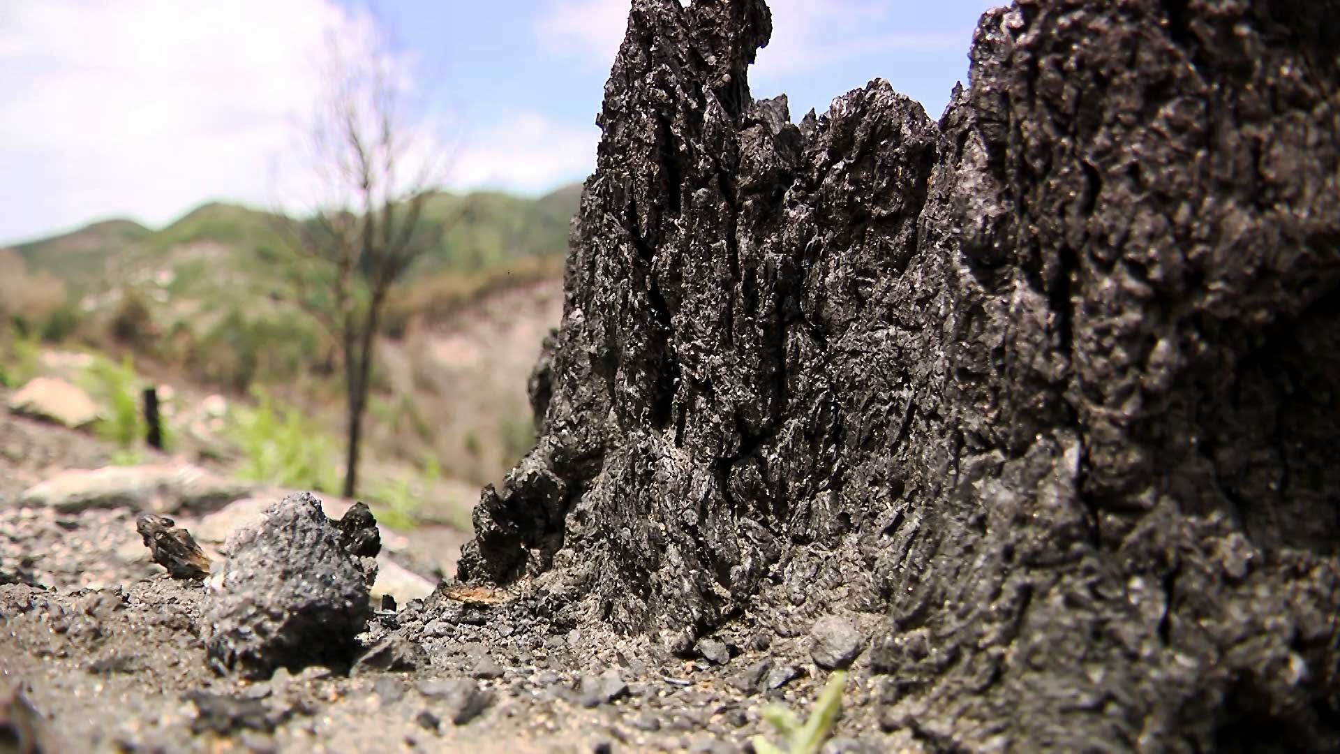 A charred tree stump from the Bighorn Fire on the Santa Catalina Mountains. July 2020.