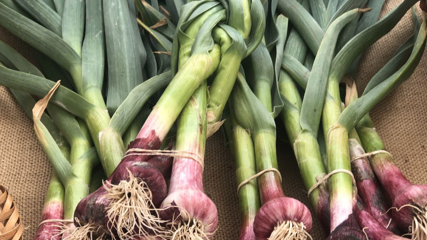 """From the """"Good Food Finder"""" webpage: """"Good food is all about taste and freshness. But choosing local means more than delicious and more nutritious food! Local food builds vibrant communities, supports farmers and food entrepreneurs, protects the environment, and fosters a robust local economy."""""""