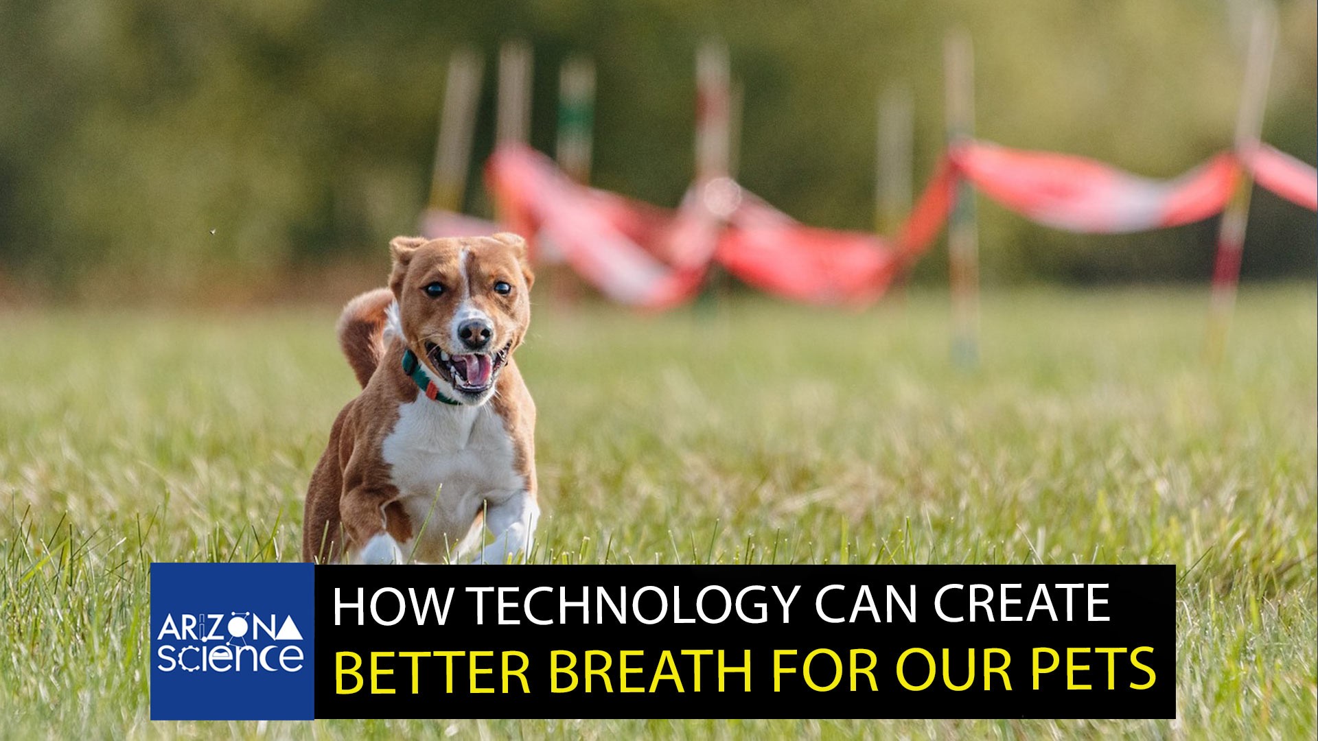 New invention gives dogs minty fresh breath.