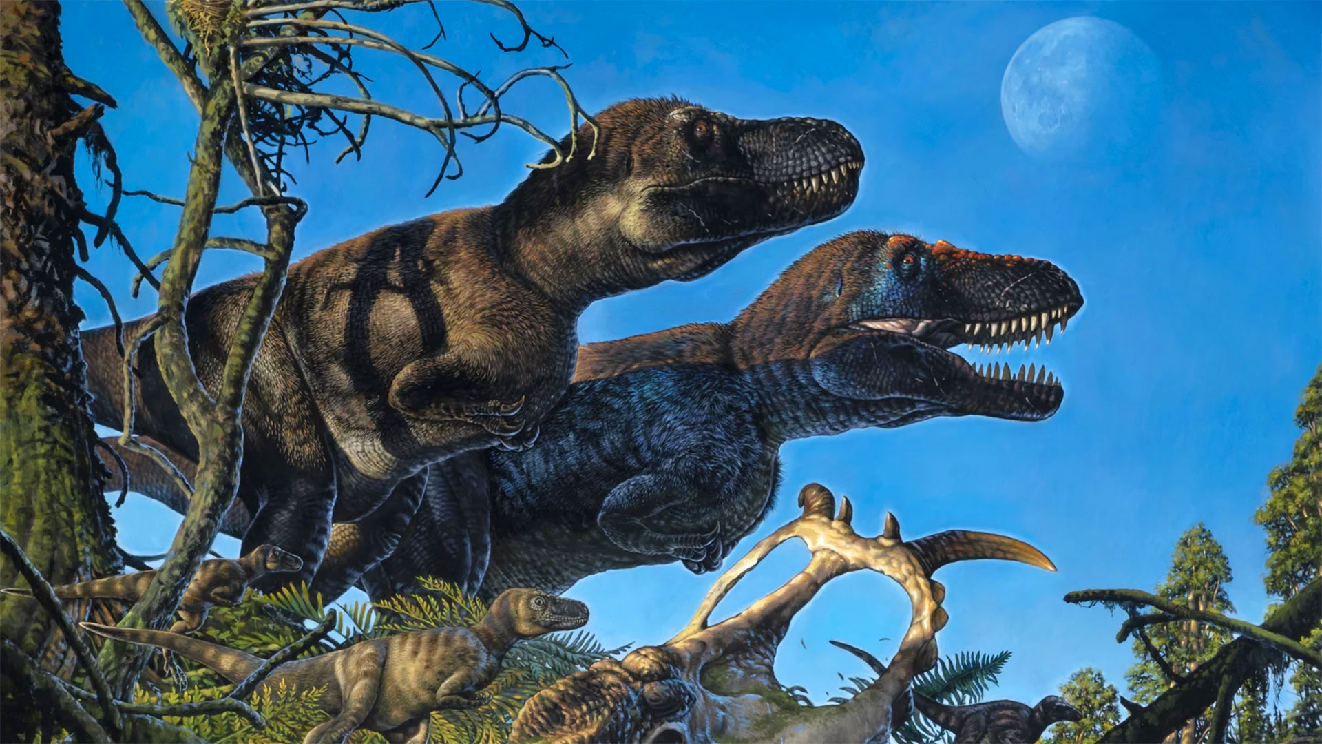 An illustration shows a pair of adult tyrannosaurs and their young living in the Arctic during the Cretaceous Period.