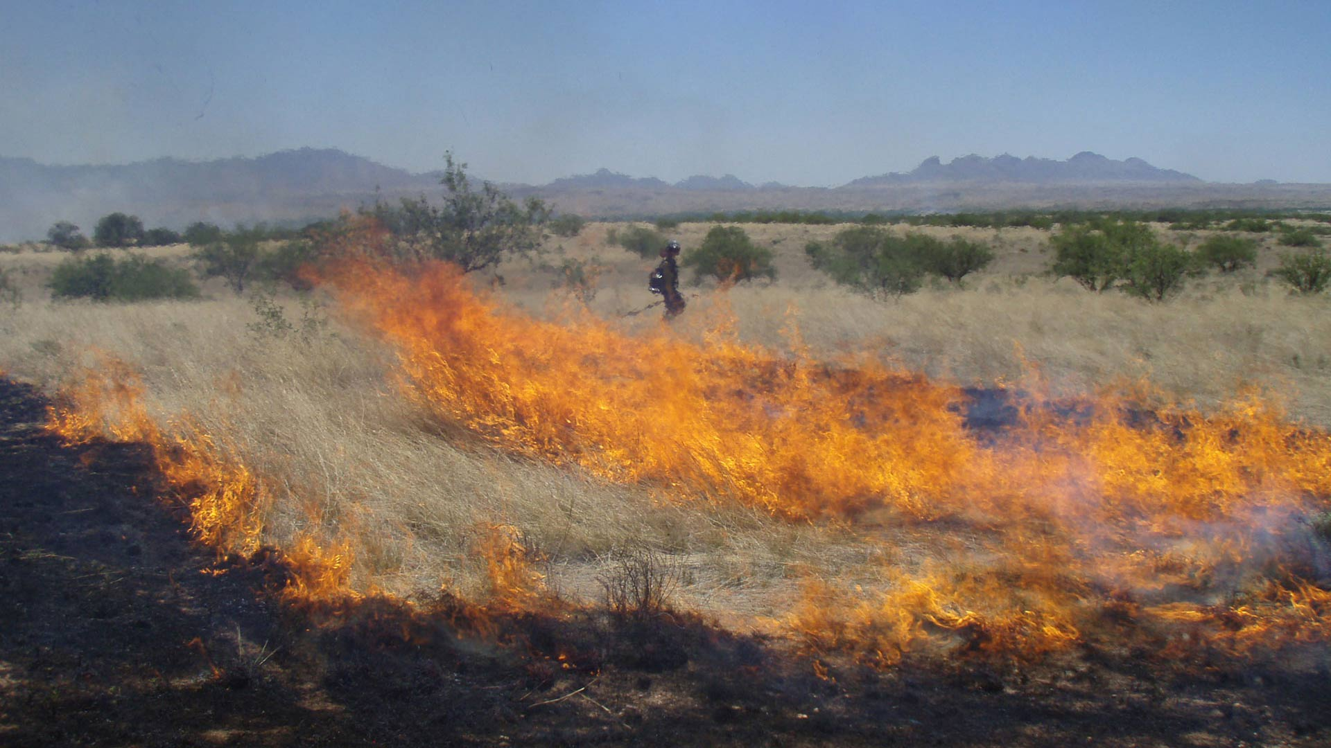 The Bureau of Land Management used prescribed burns across many of its properties for habitat improvement and to reduce the risk of severe wildfires.