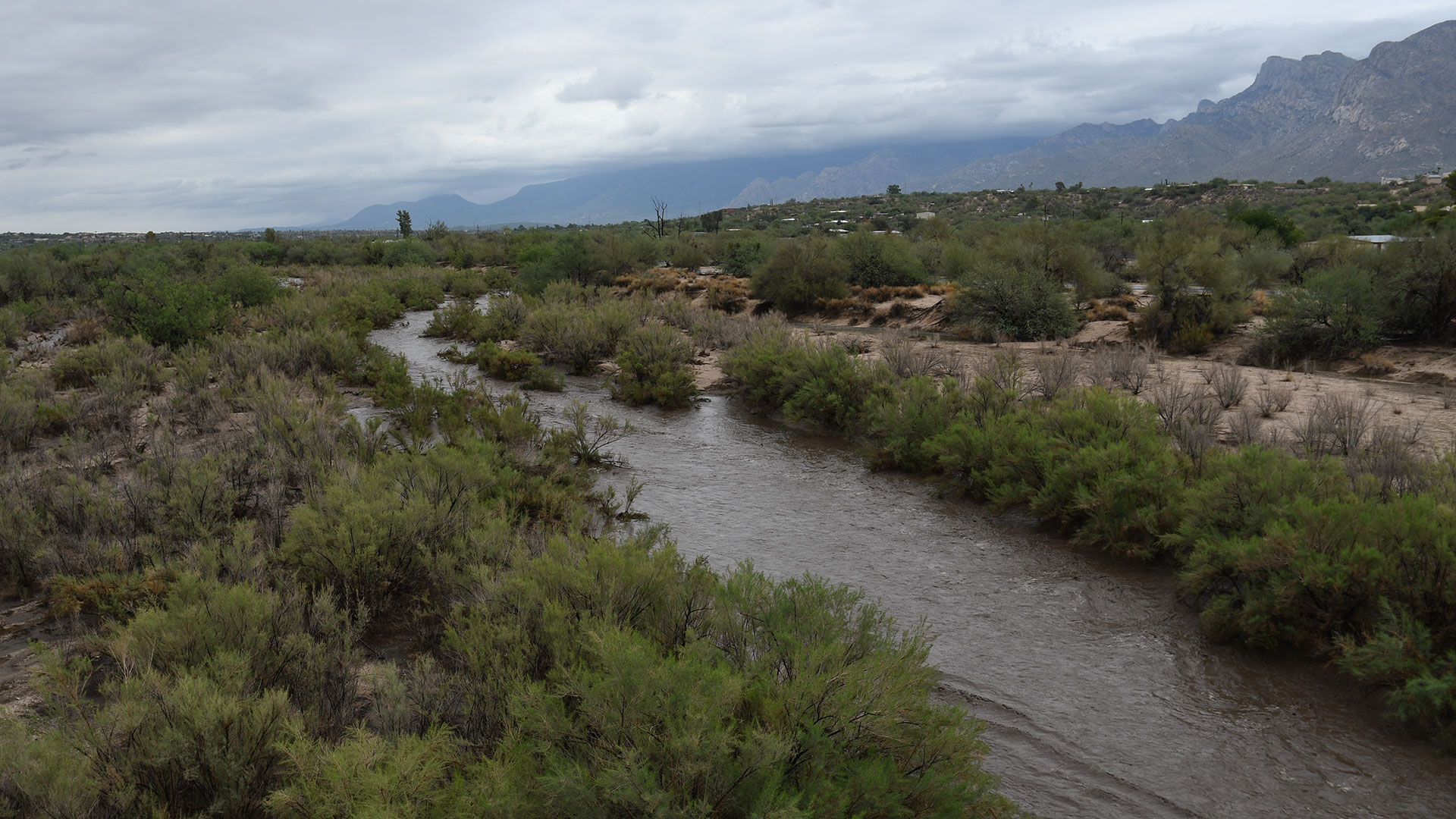 Canada del Oro wash looking east from the bridge on La Cholla during Monsoon 2021.