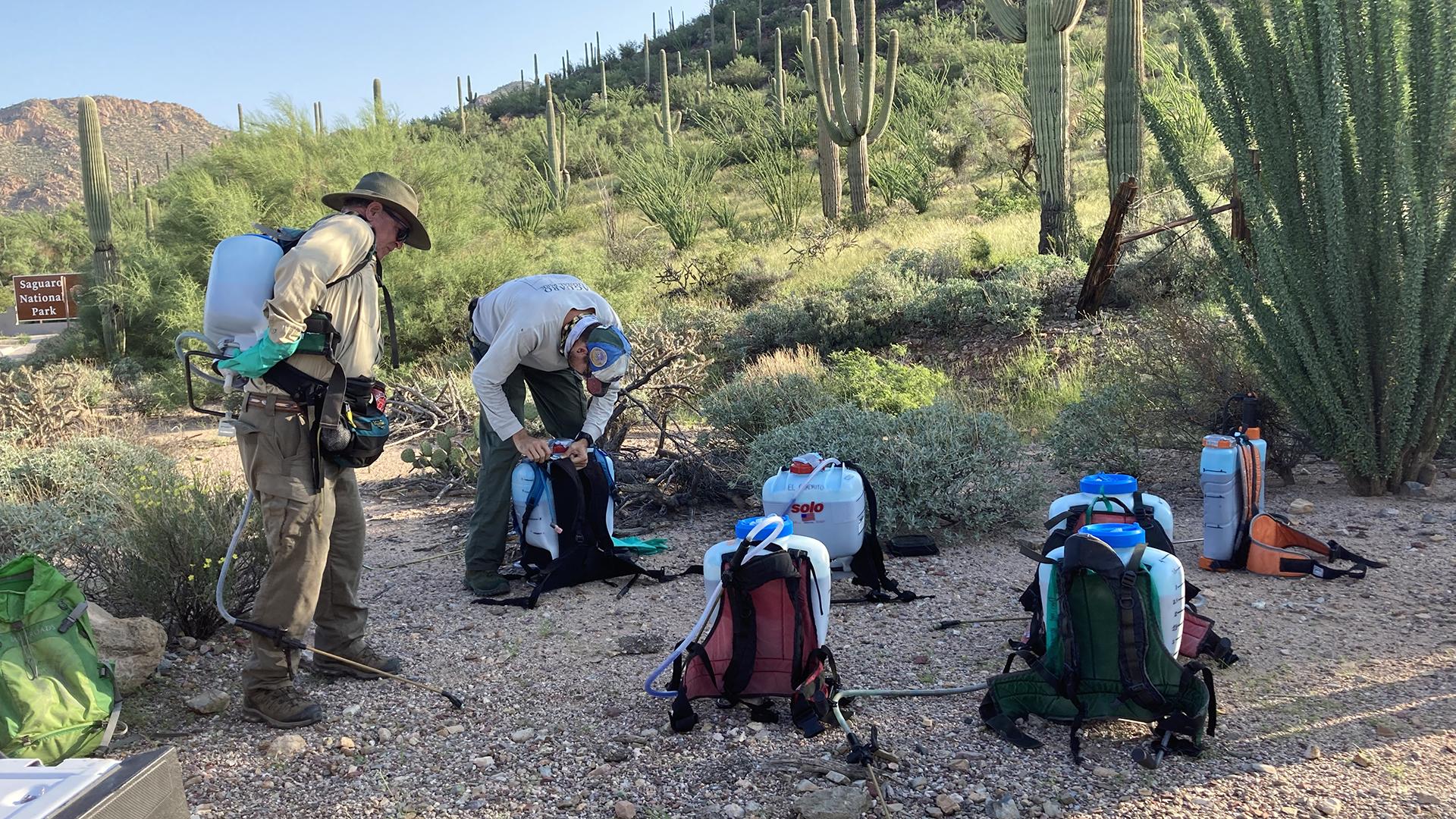 Buffelgrass 2021 SNP backpacks