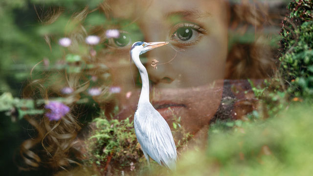 """The short story """"A White Heron"""" was written in 1886 by Sarah Orne Jewett, and adapted for radio by Cynthia Meier in 2021."""