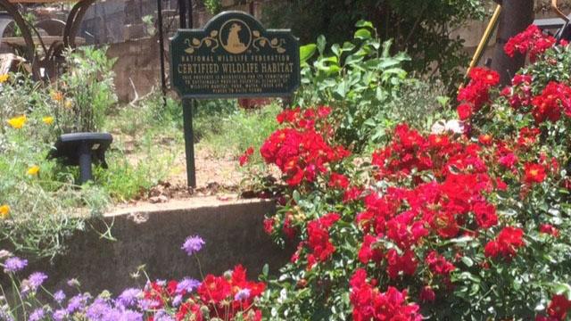 bisbee bloomers red flowers