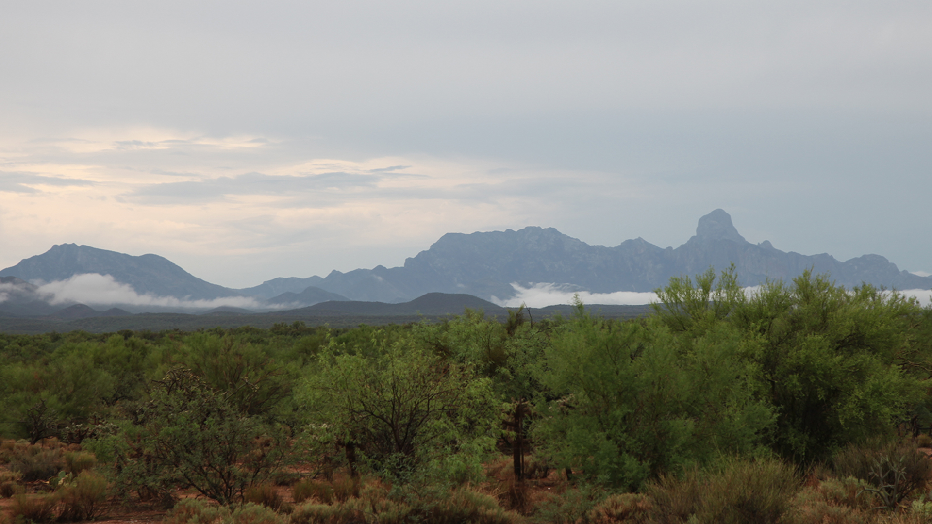Landscape near the Tohono O'odham Community College in the Tohono O'odham Nation after a morning rain in July 2021.