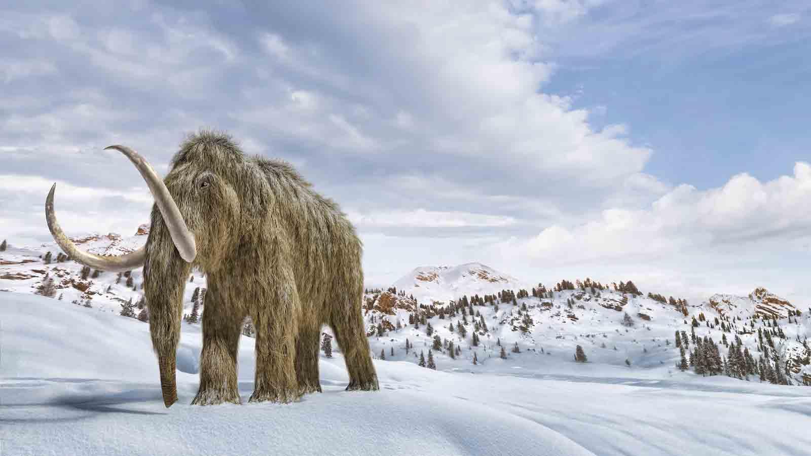 npr news mammoth