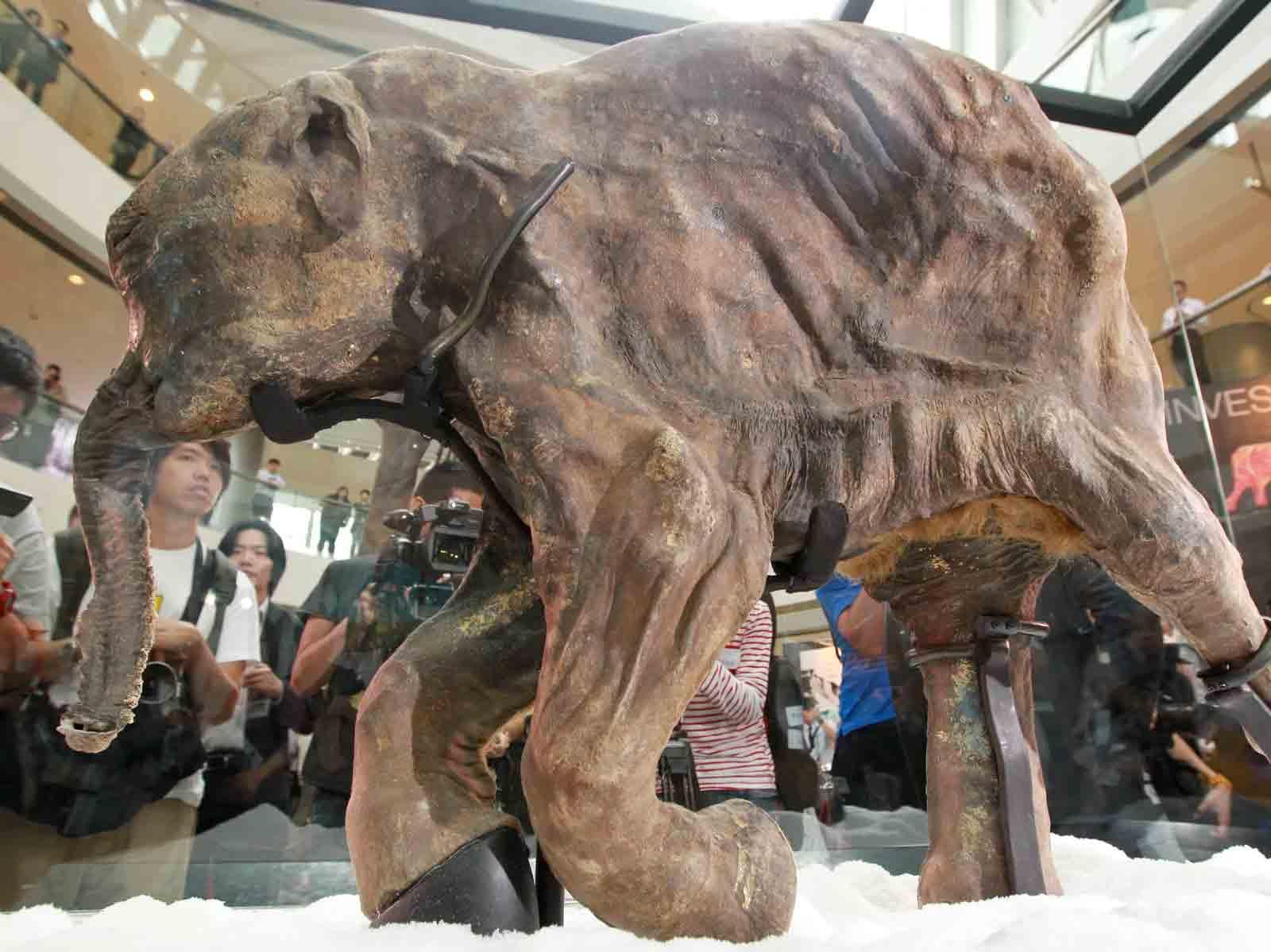 npr news mammoth 2