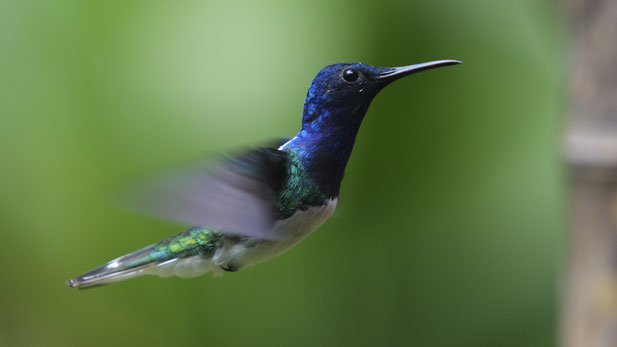 nature_hummingbirds_2