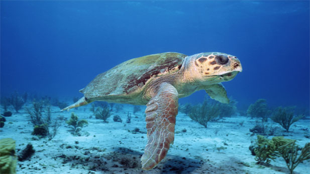 nature_lonely_turtle 2