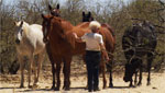 racehorse rescue