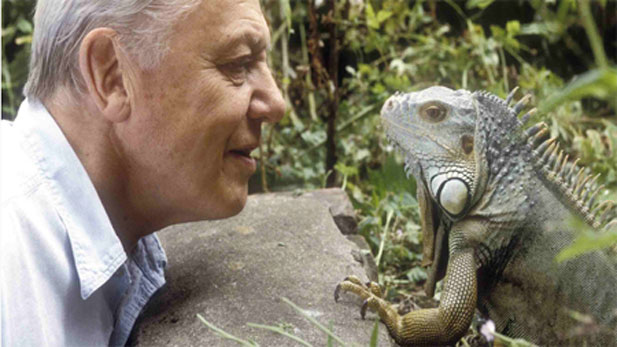 David Attenborough Collection Living With Dinosaurs