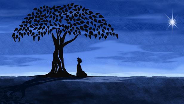 buddha_tree_spotlight