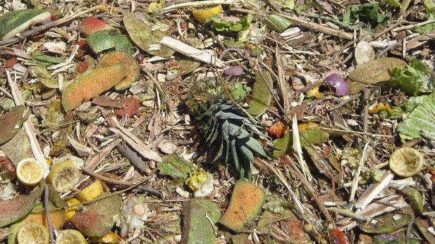 compost pile spot