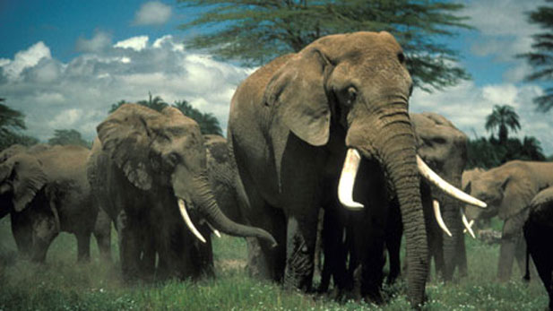 Dionysus with his with family, Amboseli National Park, Kenya.