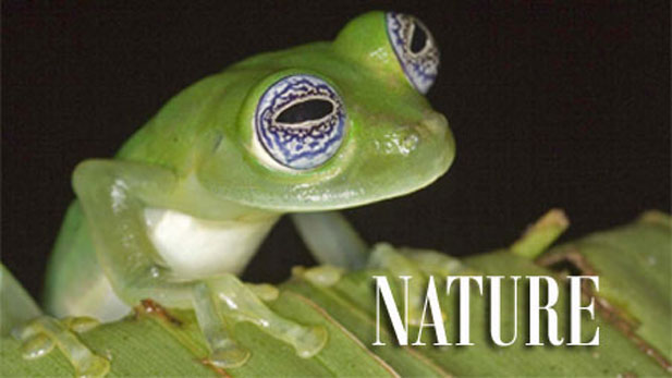 NATURE Frogs: The Thin Green Line
