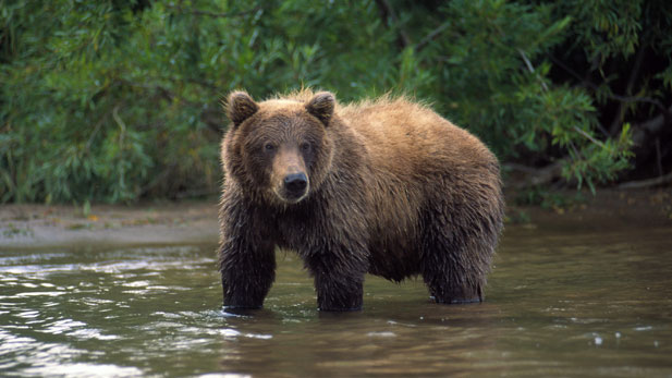 NATURE: The Good, the Bad, and the Grizzly