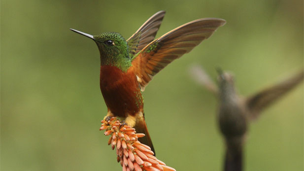 Nature Hummingbirds Magic in the Air