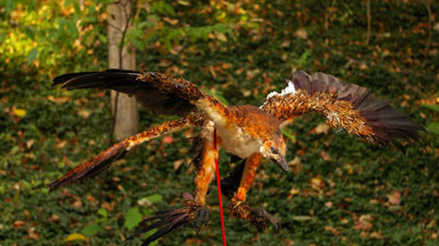 Microraptor model at the location of feathered dinosaur animation shoot.