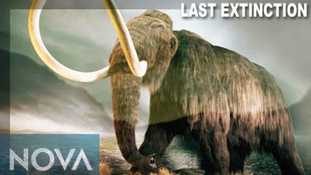 NOVA Last Extinction